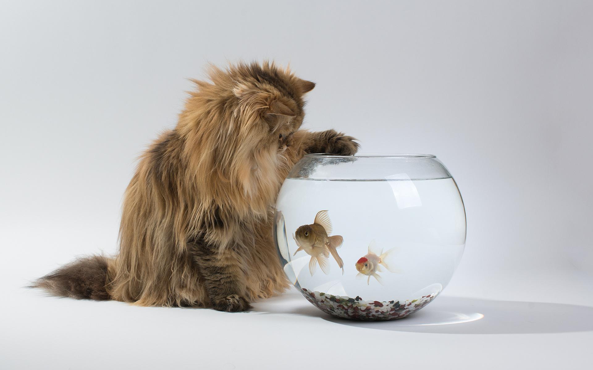 Живая открытка кошка в банке, день