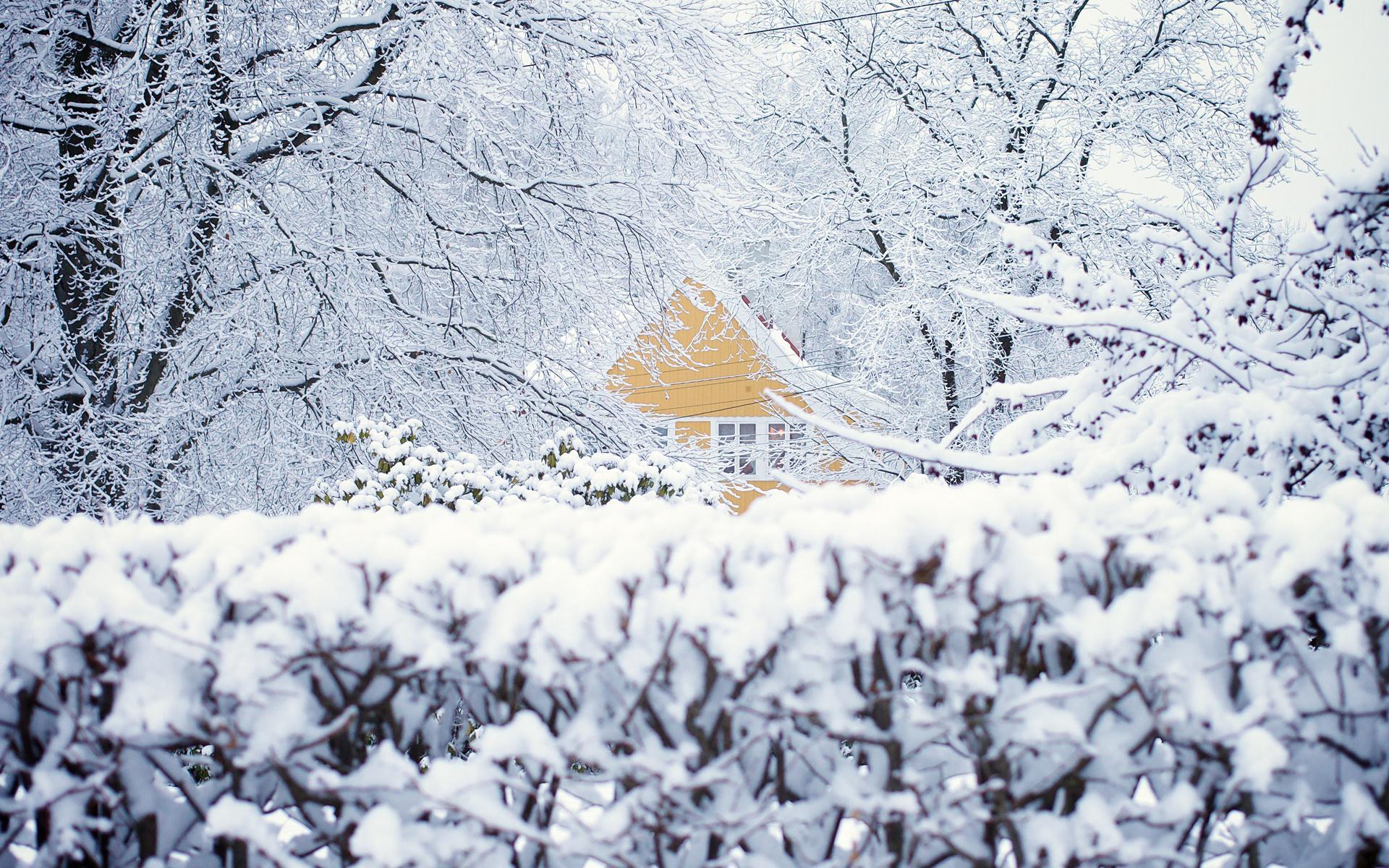 дом, осло, Норвегия, снег, деревья, зима