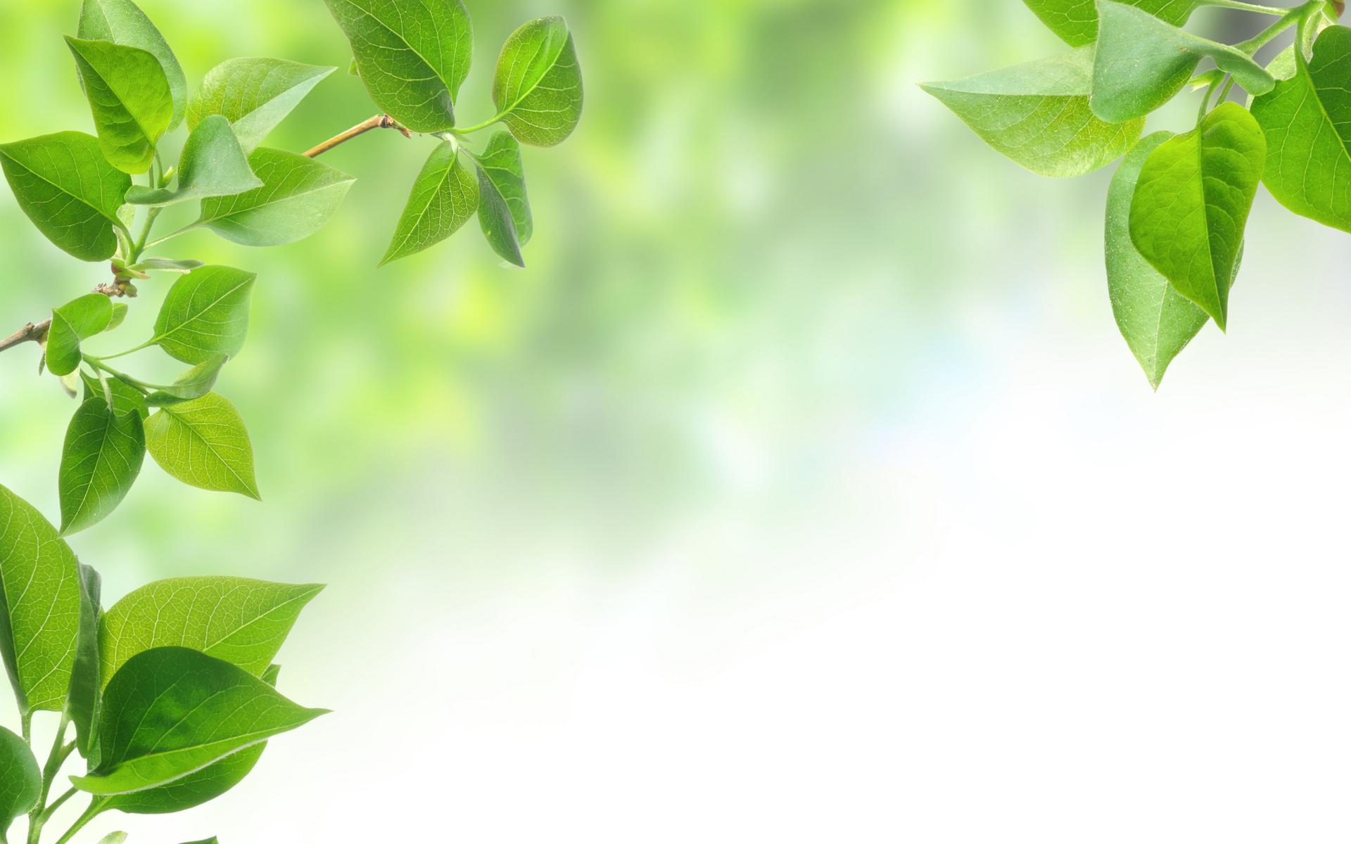 Первым, открытка с зеленью