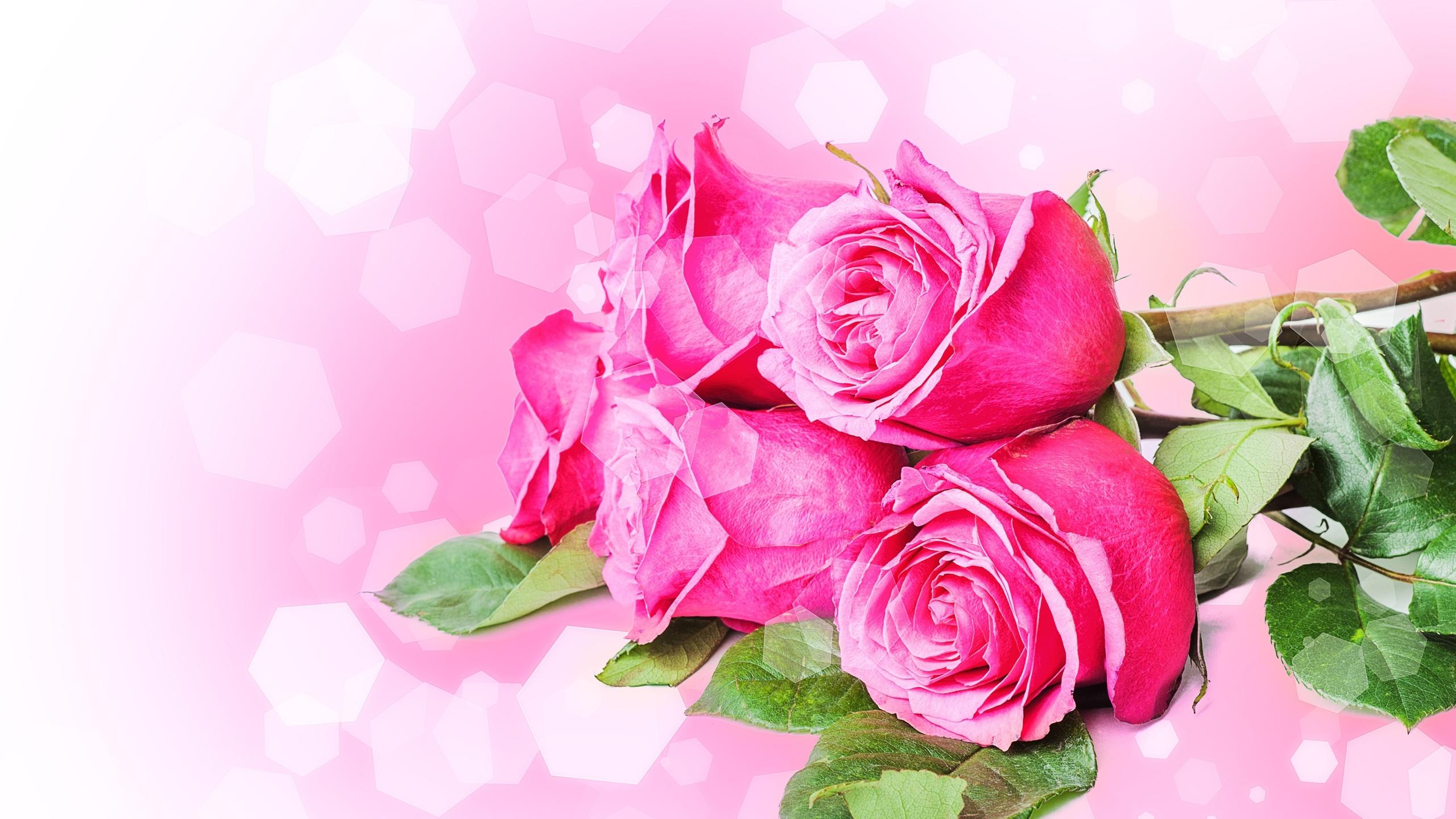 после открытка с днем рождения дочери красивые цветы установили задний