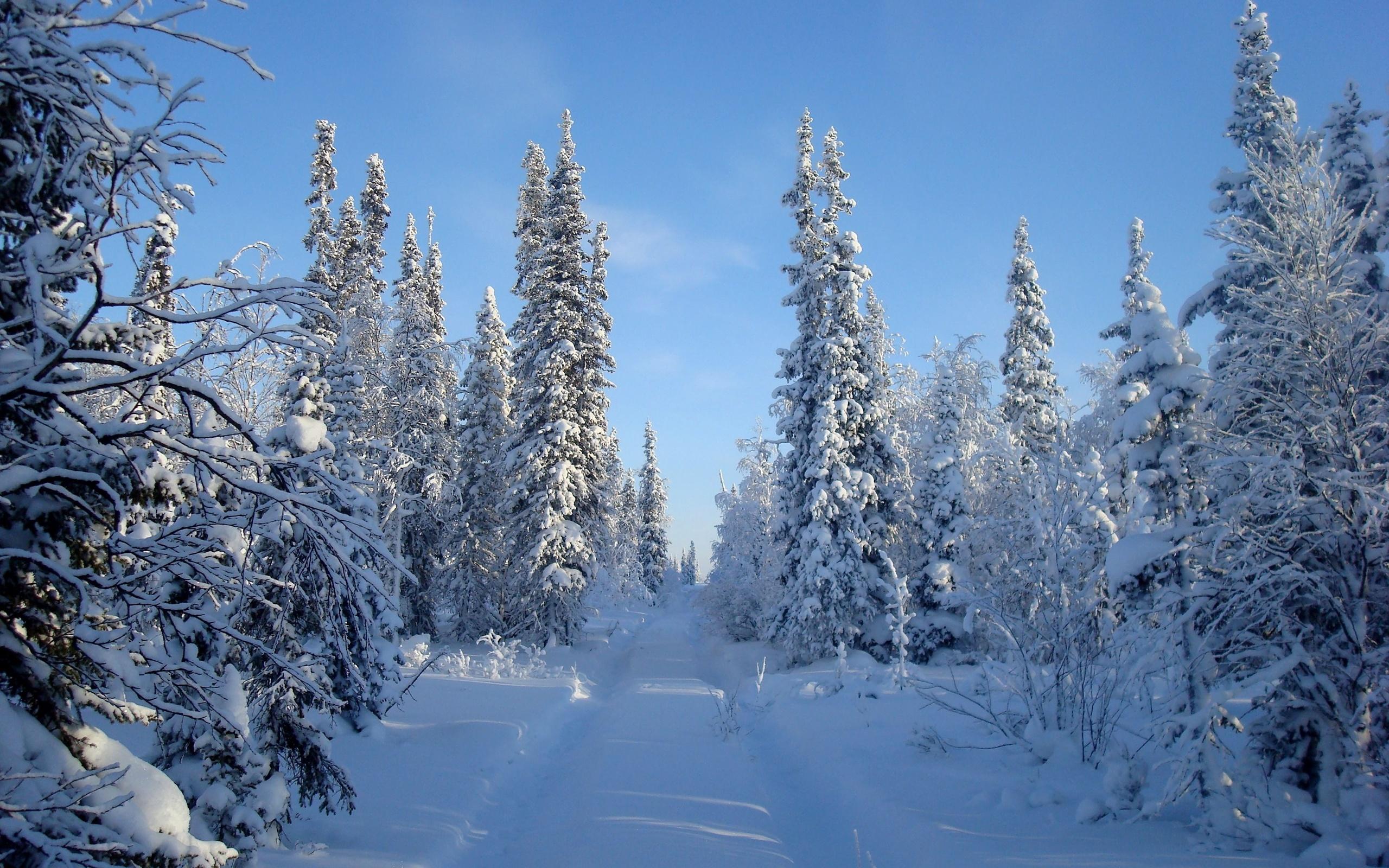 День матери, картинки зимнего леса в хорошем качестве