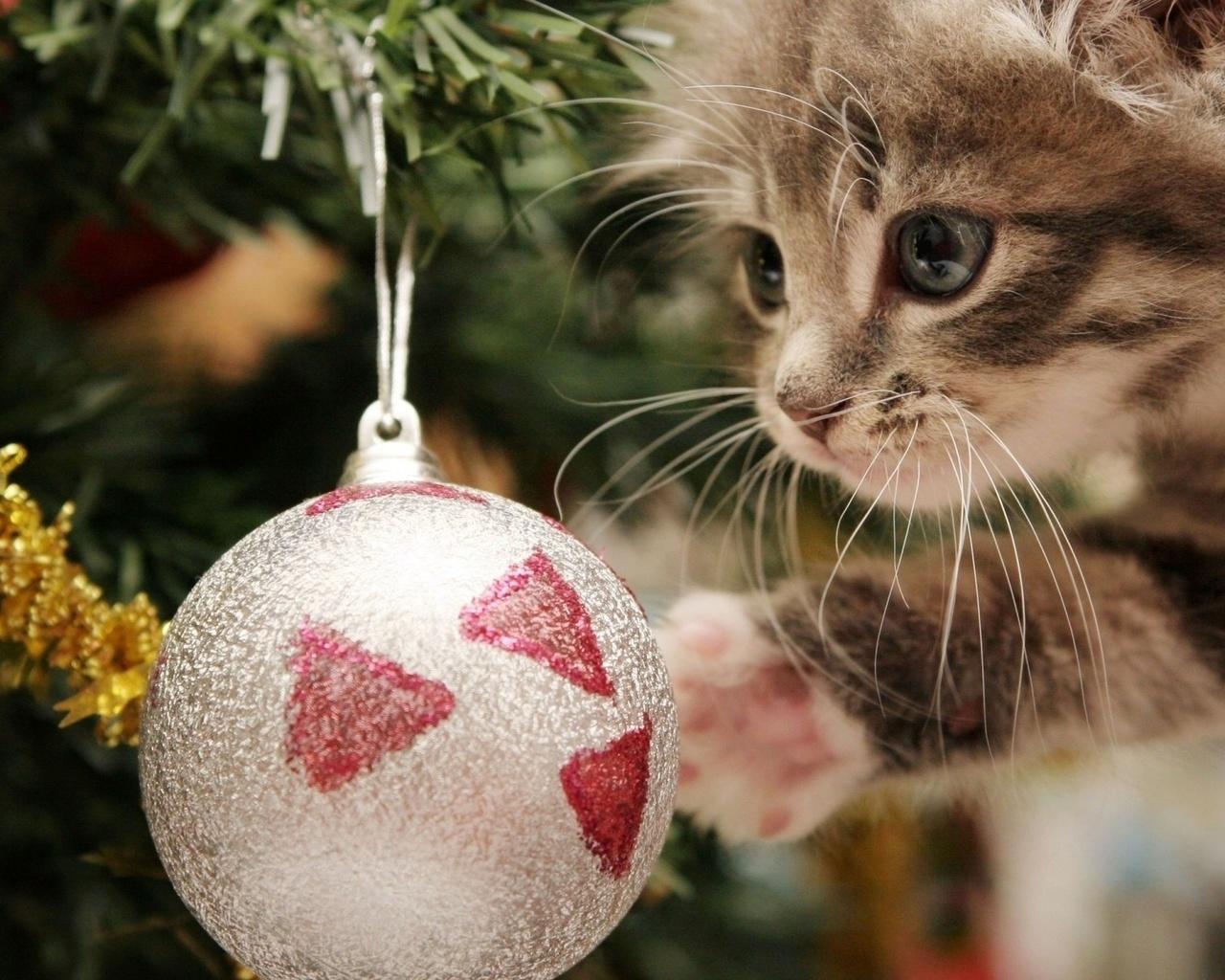 Открытка, картинки новый год котики мимими