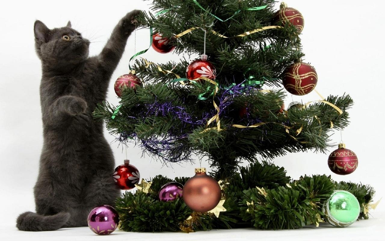 Открытки котов с елочкой, отправить картинку телефона