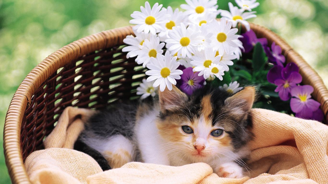 котэ, киска, cat, кот, кошка, цветы, Котенок