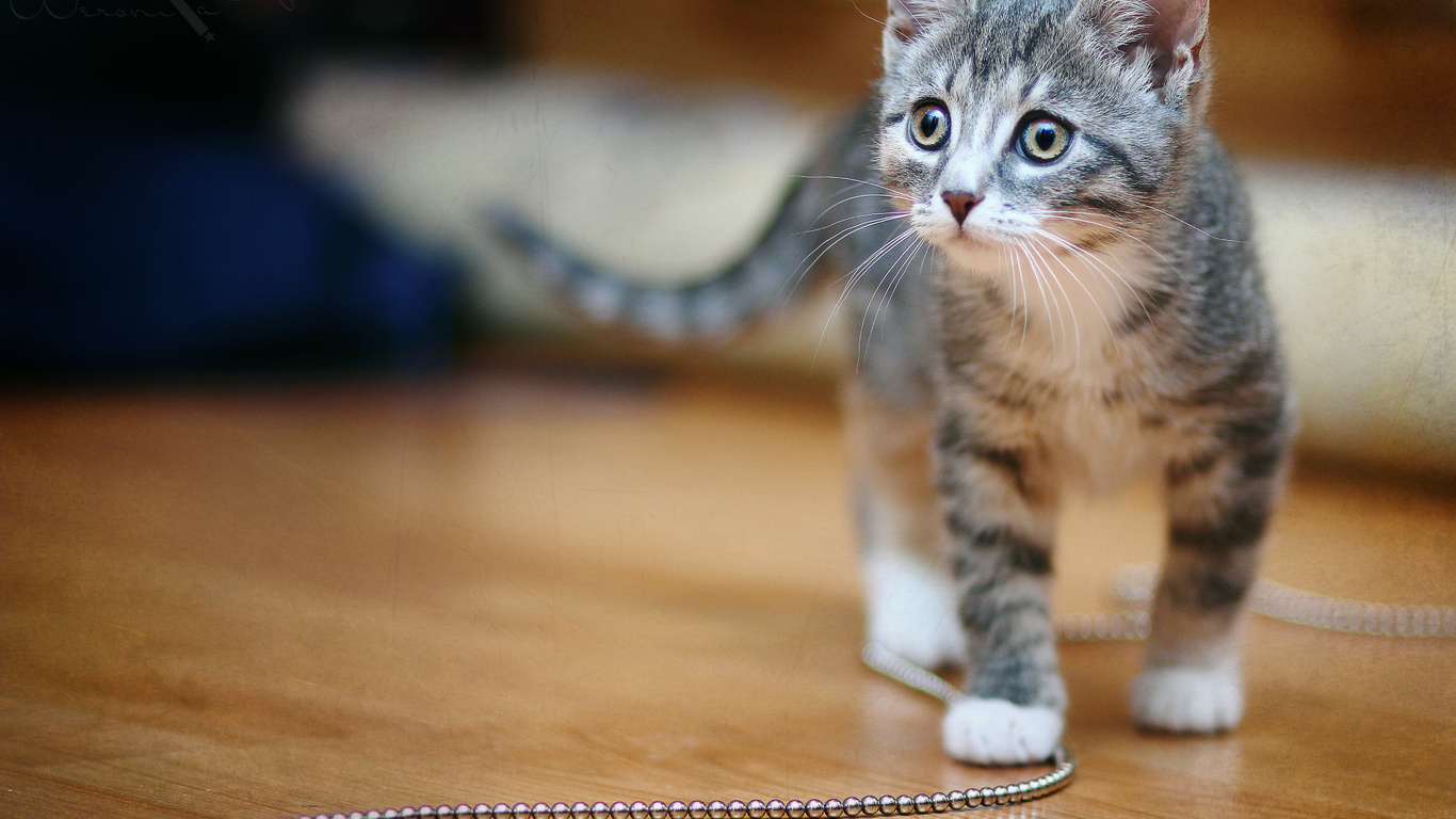 мило, Кошка, cat, киска, котенок