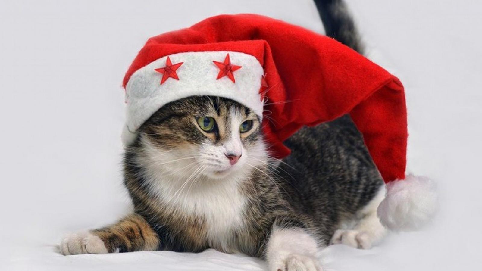 кошка, шапка, милый, красный, звезды, рождество