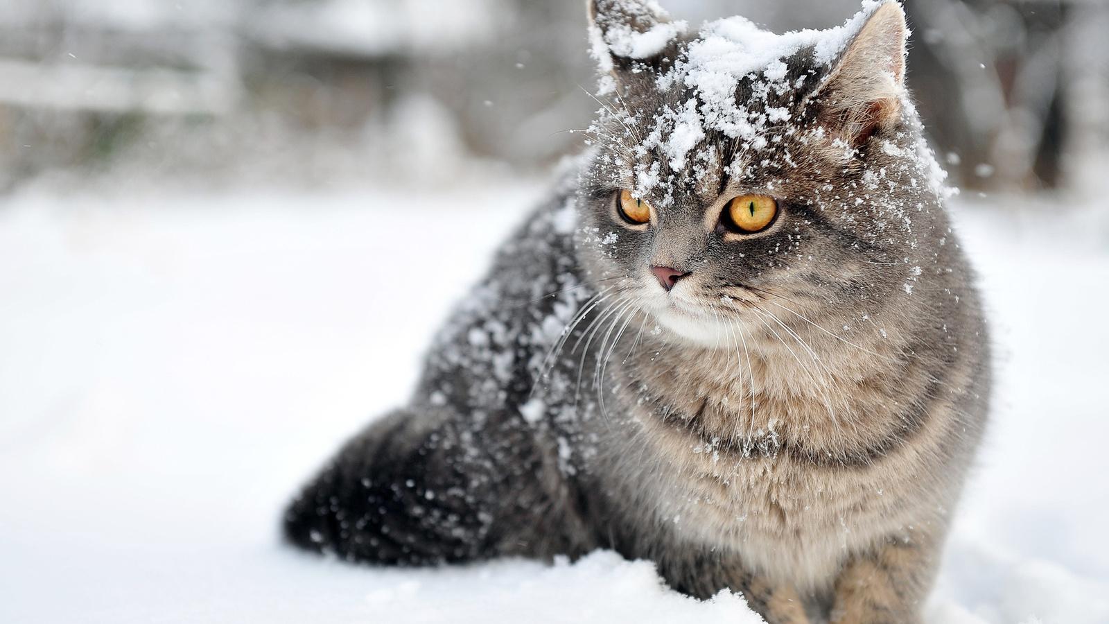 Прикольные картинки про зиму, черный