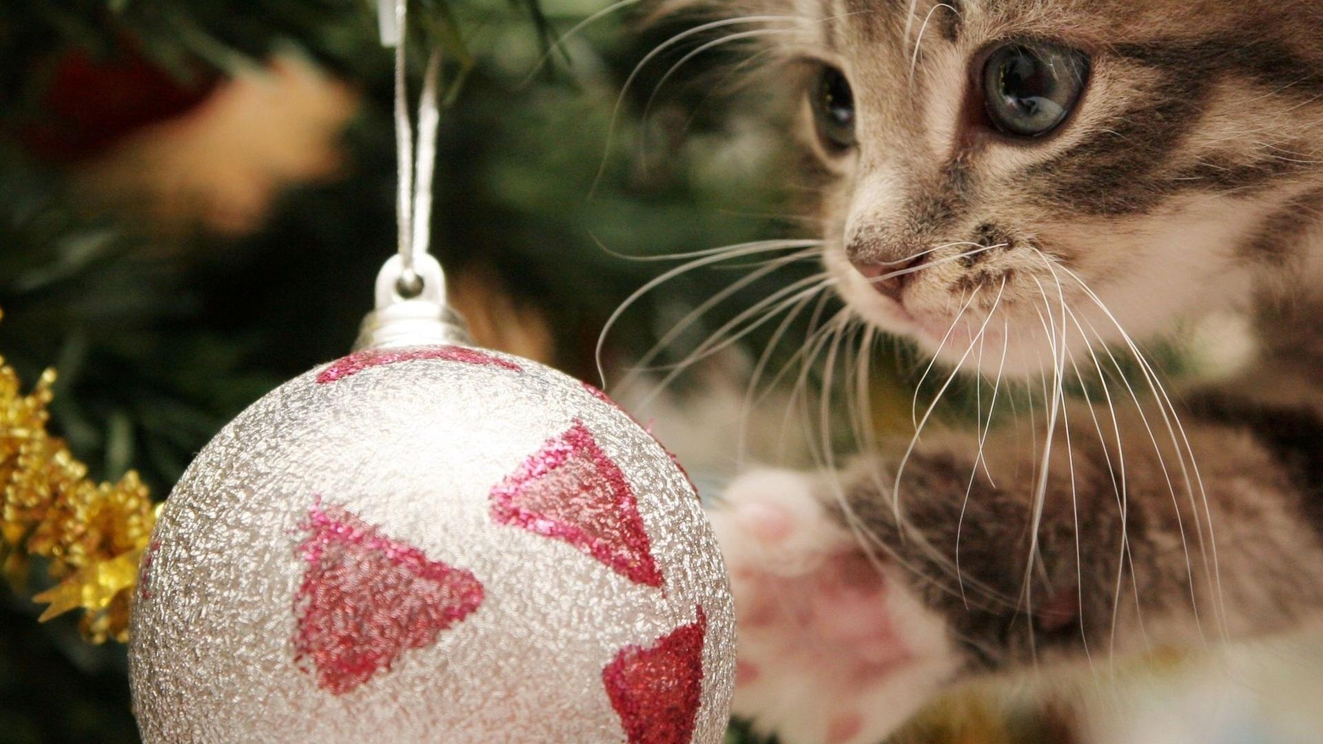 Новогодние картинки с котами на рабочий стол