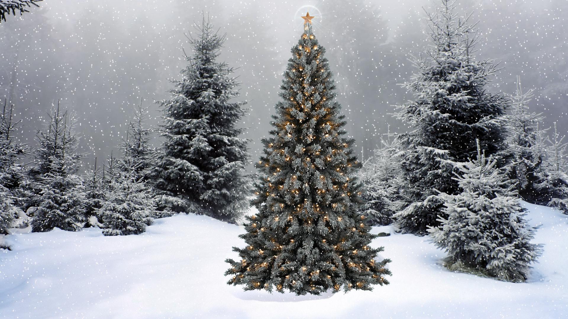 Картинки с новогодними елками, праздником