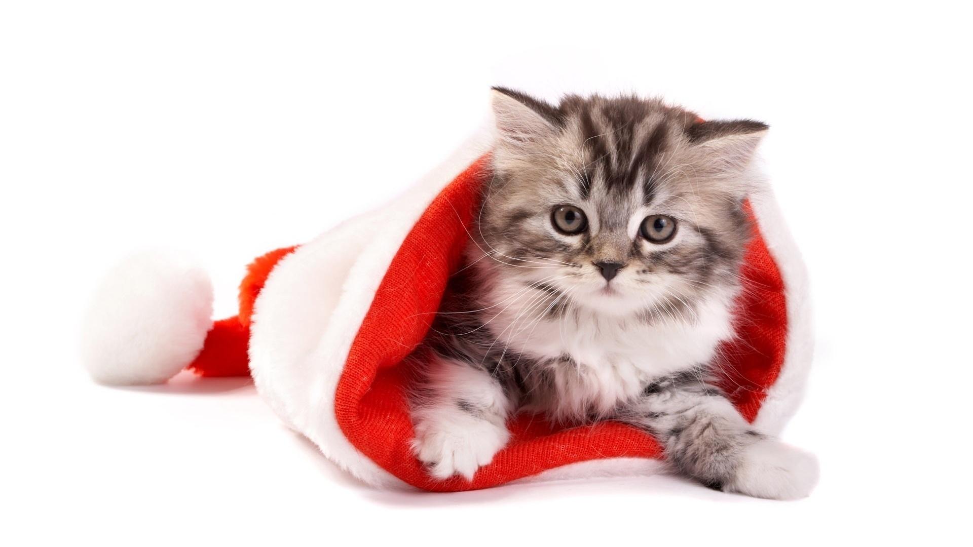 Картинки с кошками с новым годом