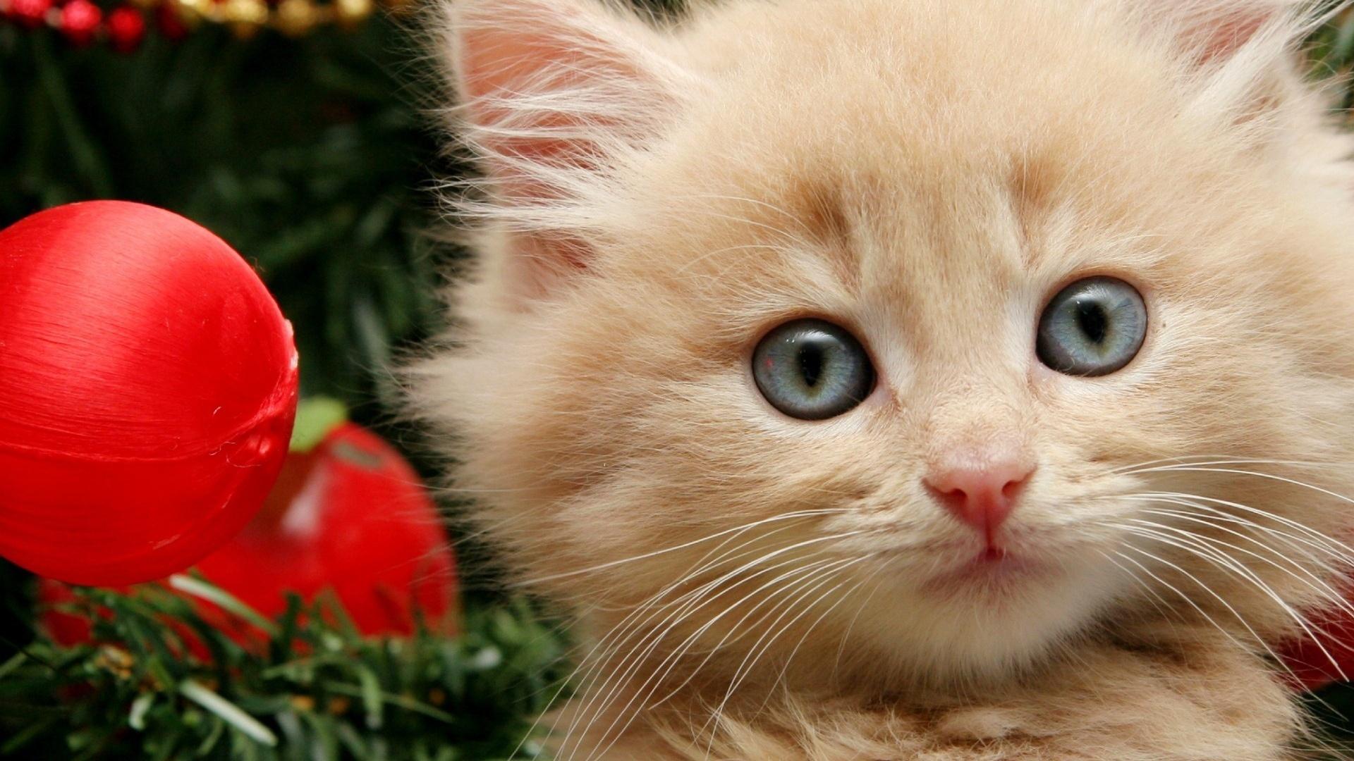 котенок, пушистый, новый год, игрушки