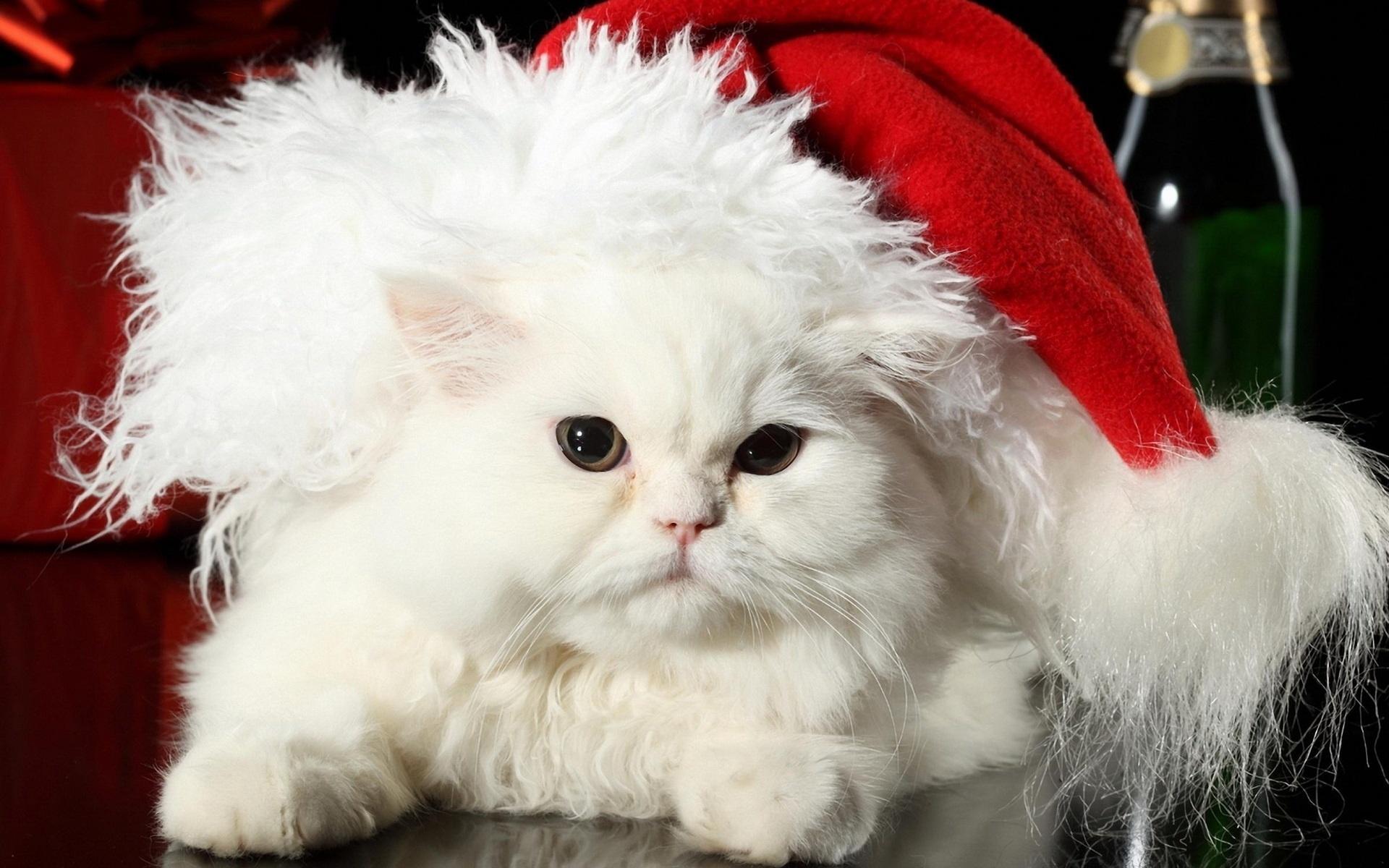 Картинки на новый год животные