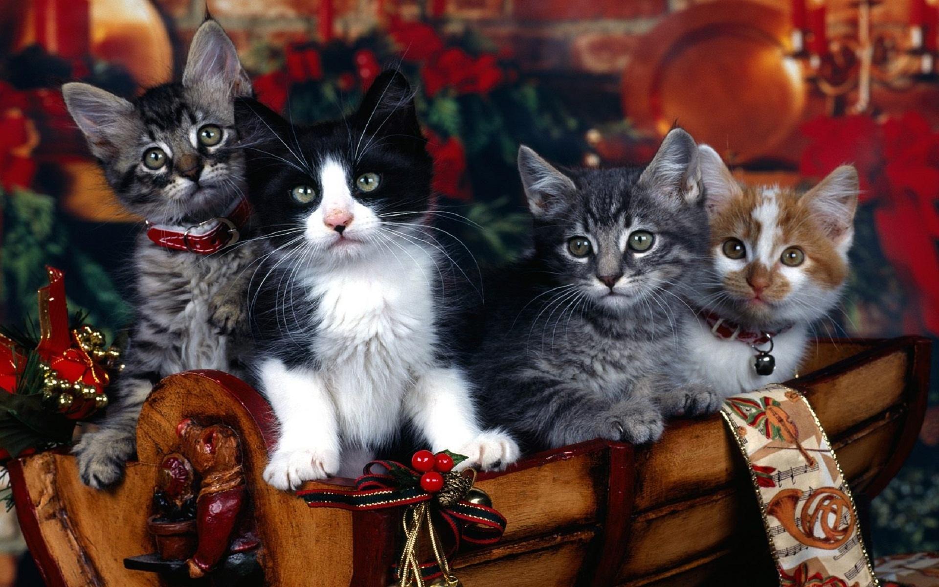Летием, новогодняя картинка с котами
