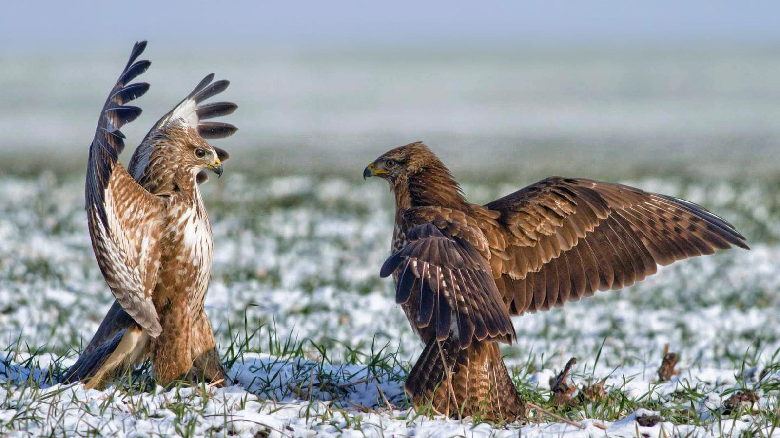 Смешные картинки про орлов, картинки