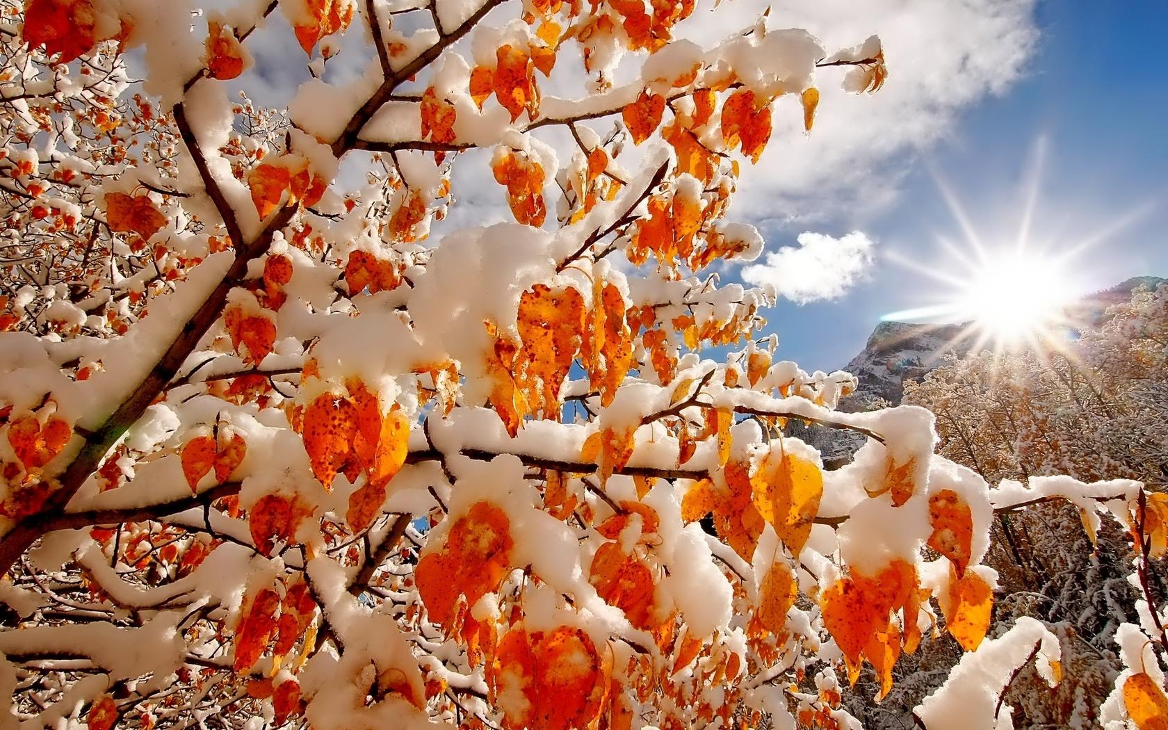 листва, снег, зима, утро, рассвет, природа, первый снег