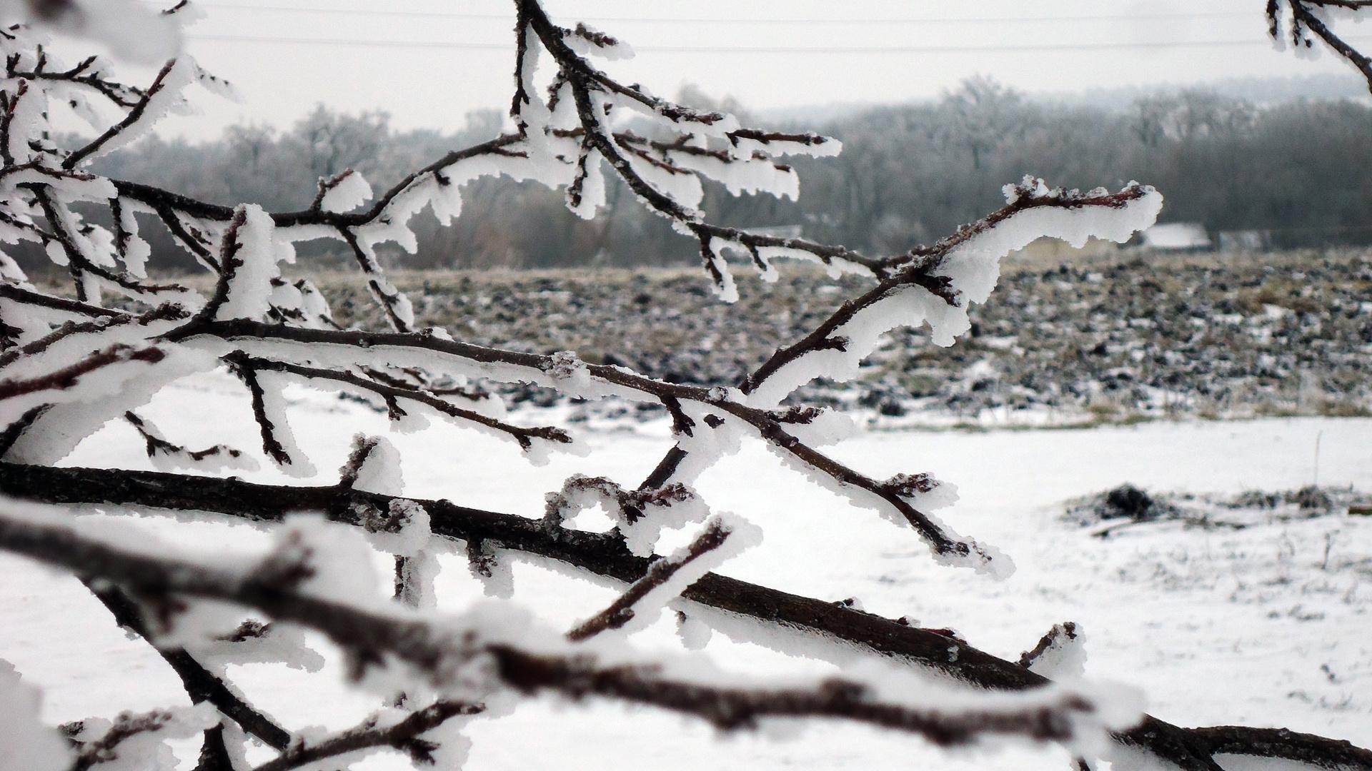 обои на телефон пушистый снег на ветиах деревьев