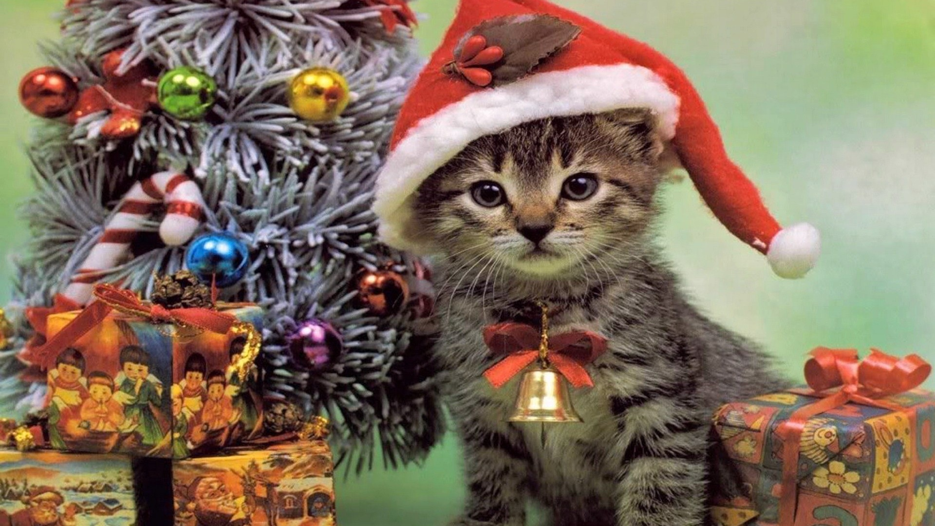 Картинки новый год котики мимими