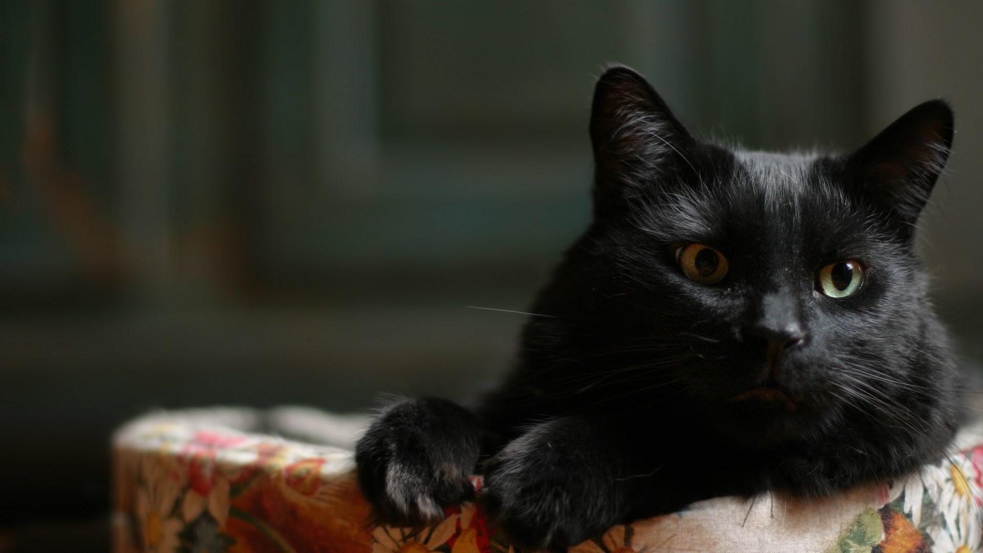 Картинка с черной кошкой