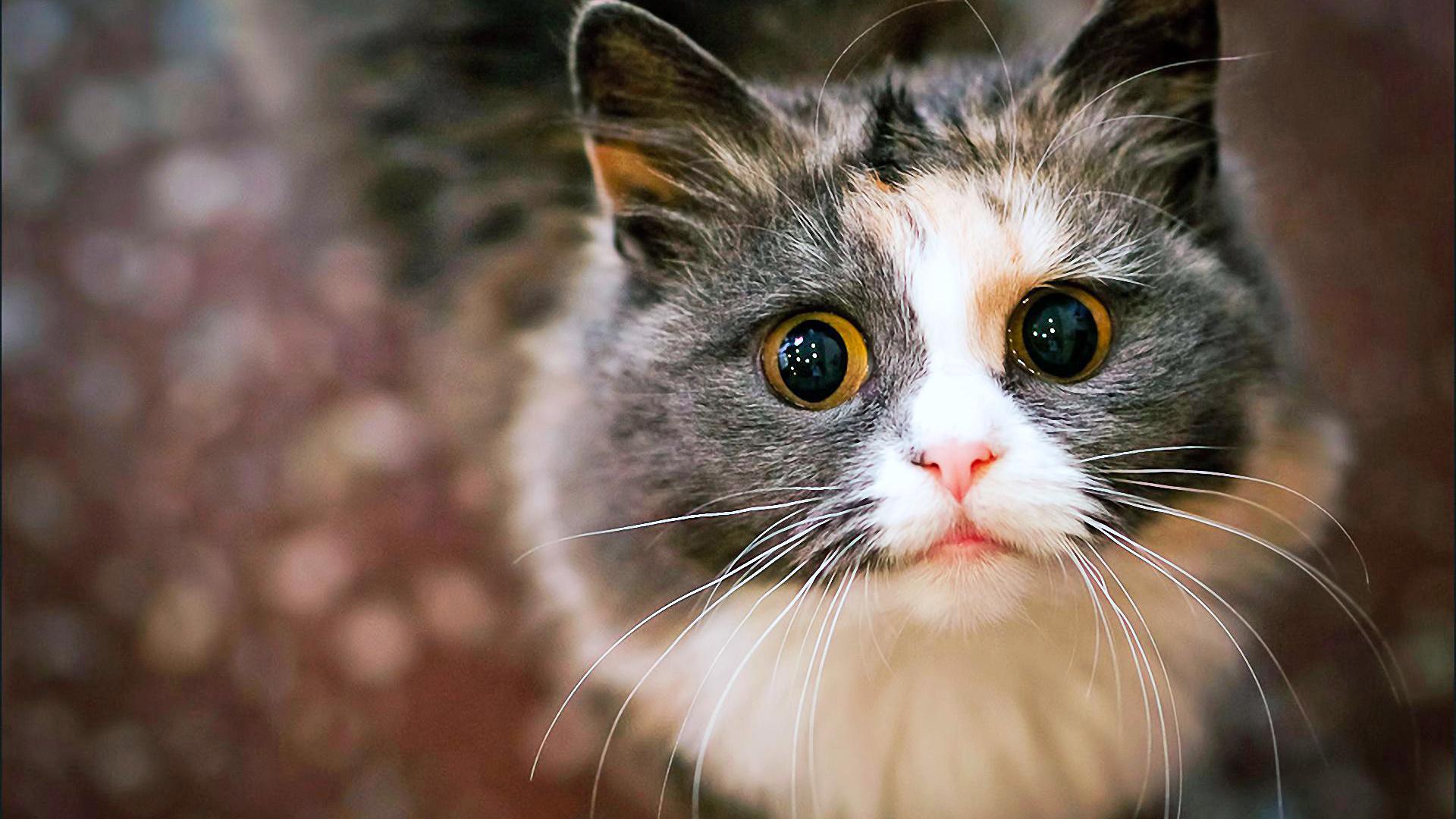 Бракосочетанием открытки, смешные картинки с кошками на заставку