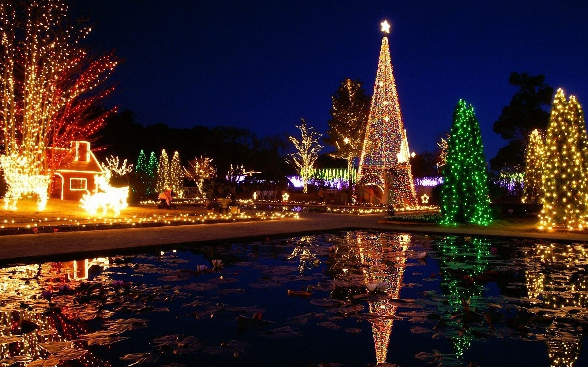 toluca lake christmas trees - HD1600×1000