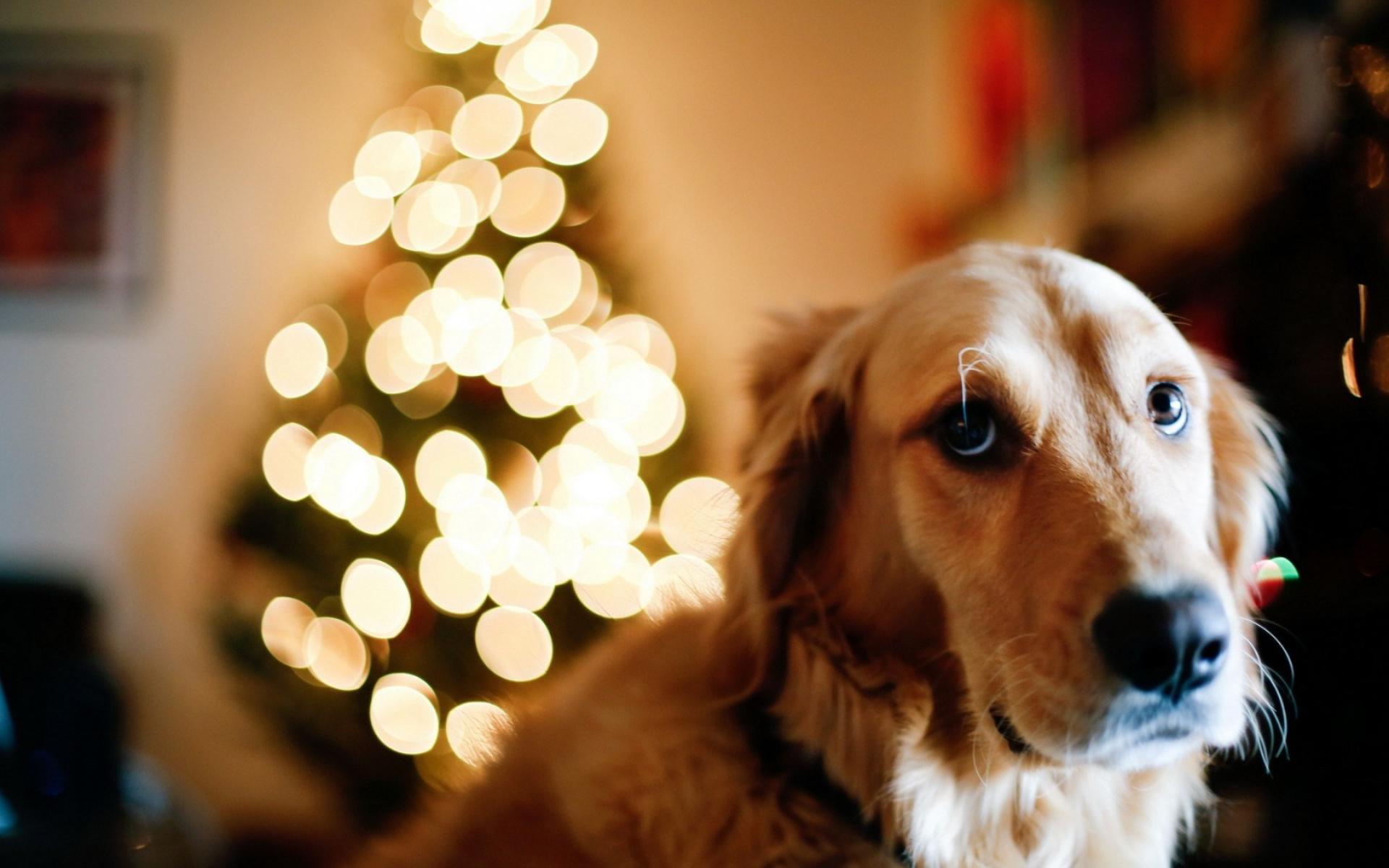 кружки картинки для года собаки изделия имеют высокое