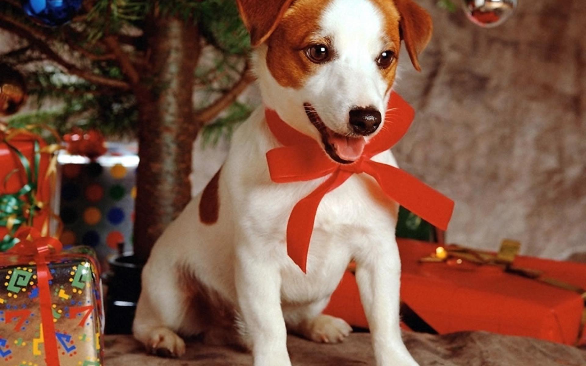 Прикольные картинки, картинка с годом собаки 2018