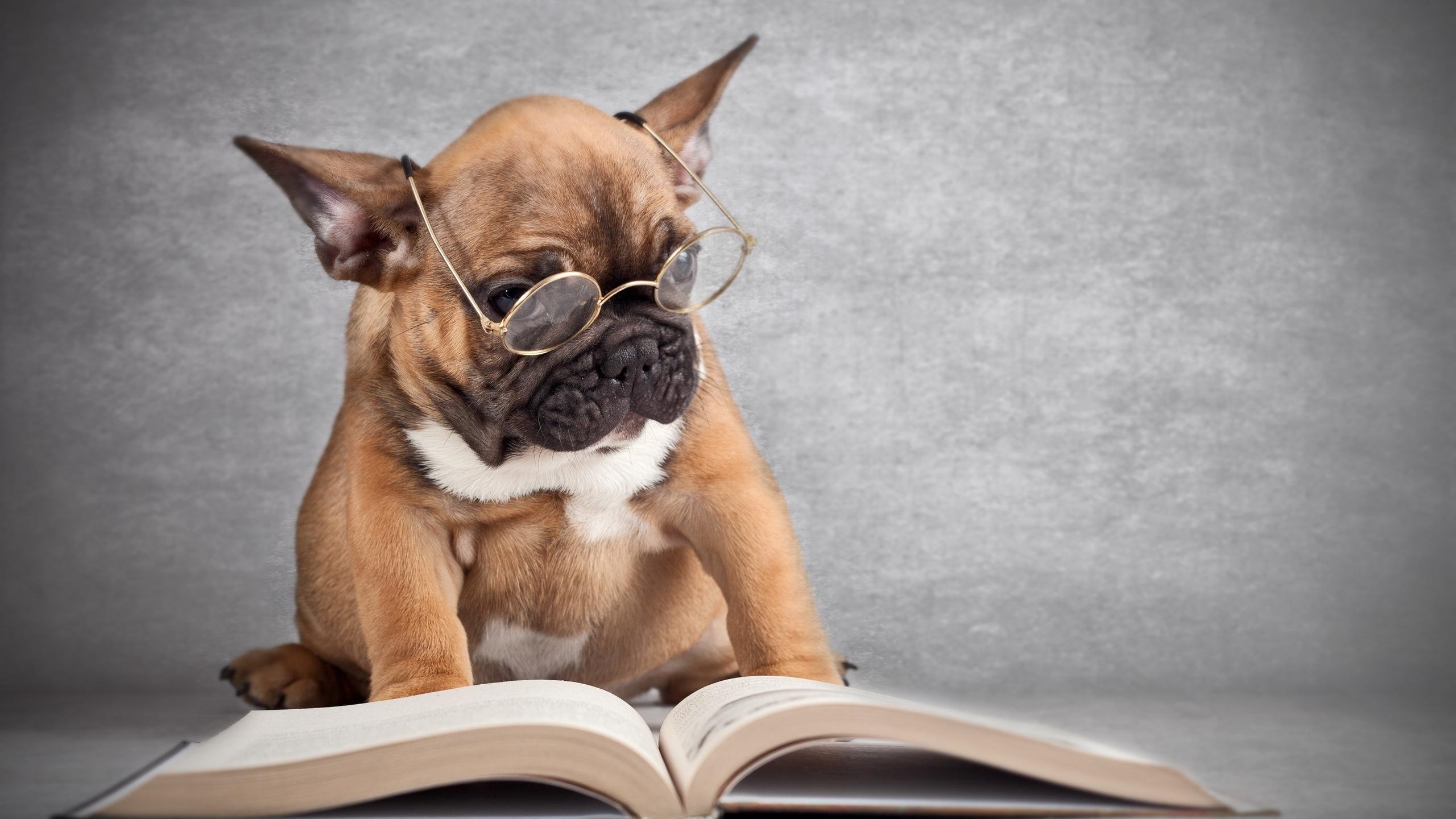 Вацап, картинки на телефон собаки прикольные