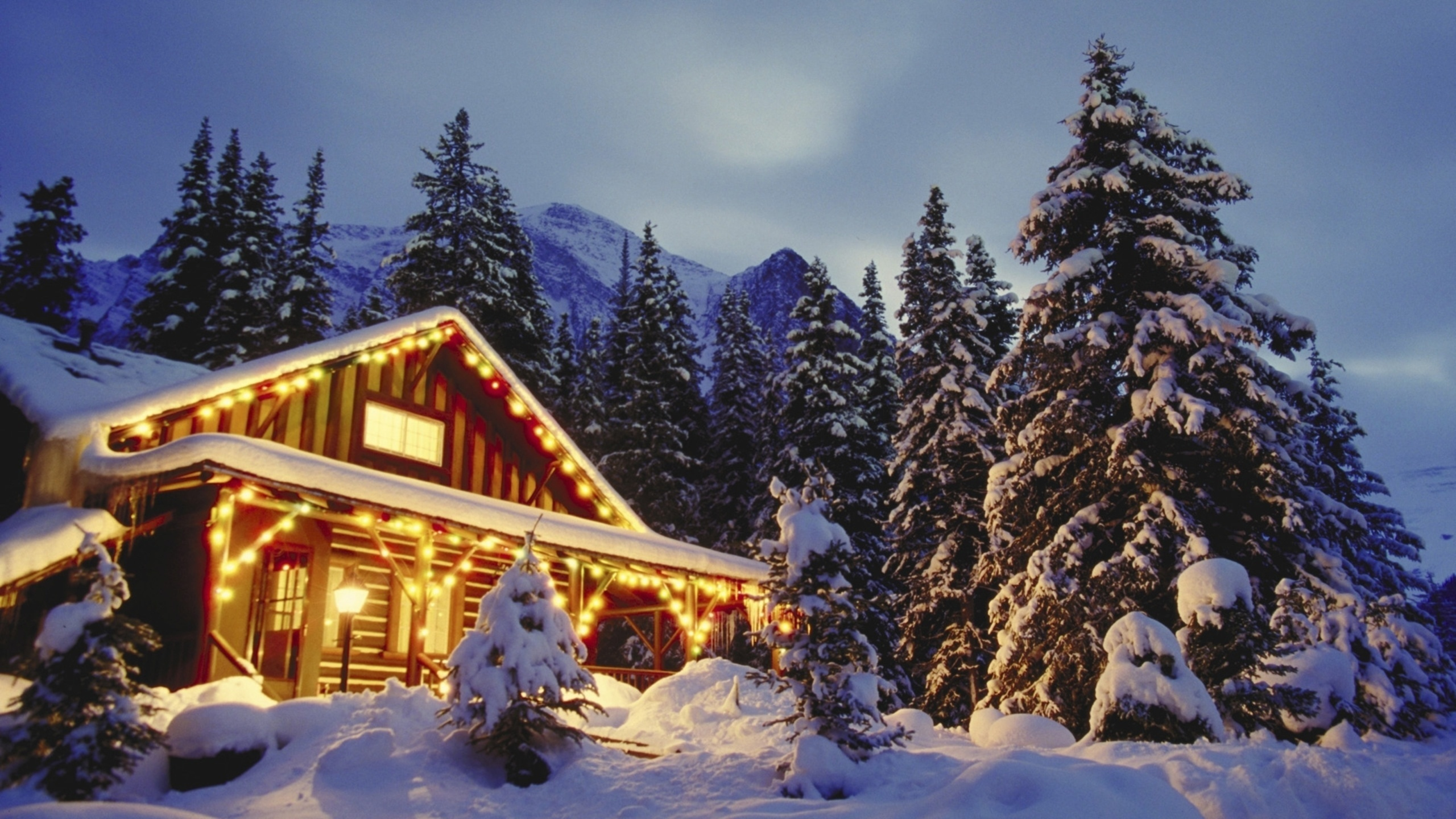 toluca lake christmas trees - HD2560×1440