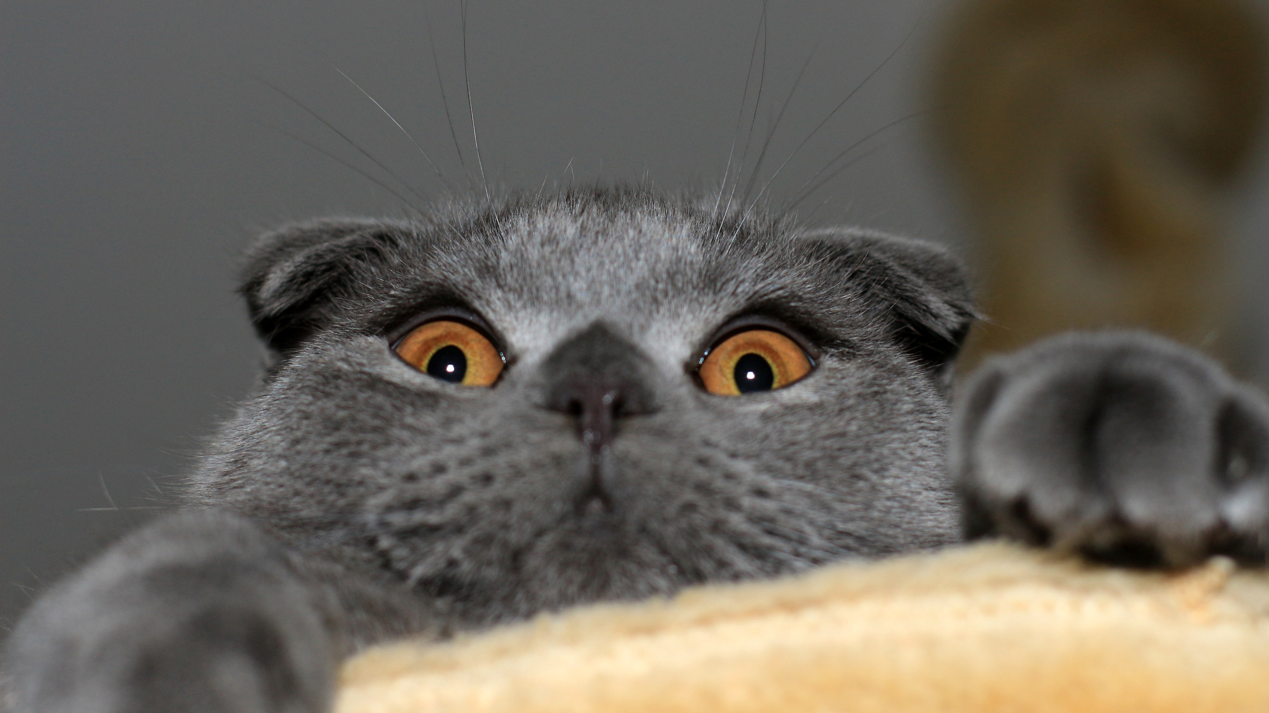 Советские, картинки британских котов приколы