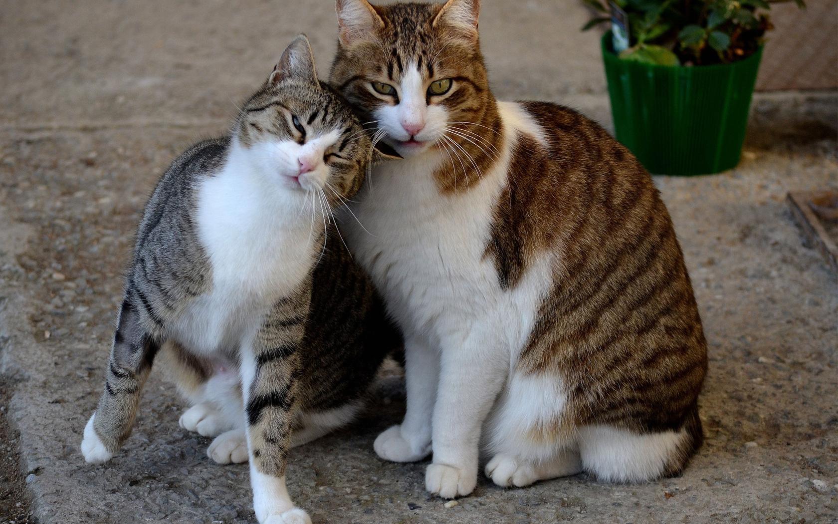 Современные, кот и кошка картинки