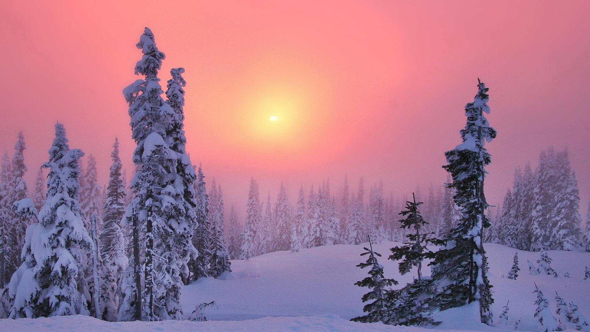 Картинки тайга зимой, поздравления