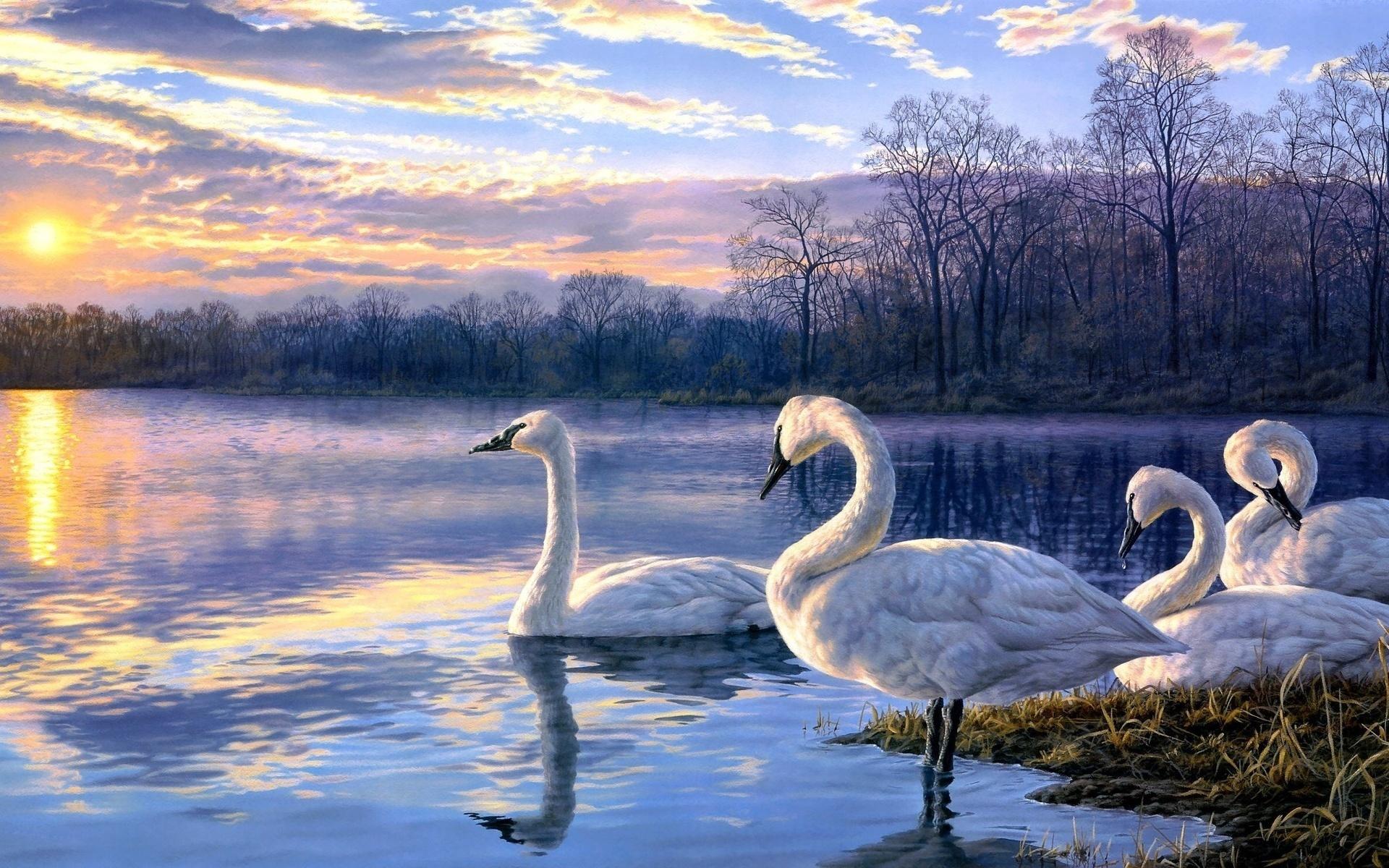 Спокойной ночи, музыкальные открытки с природой