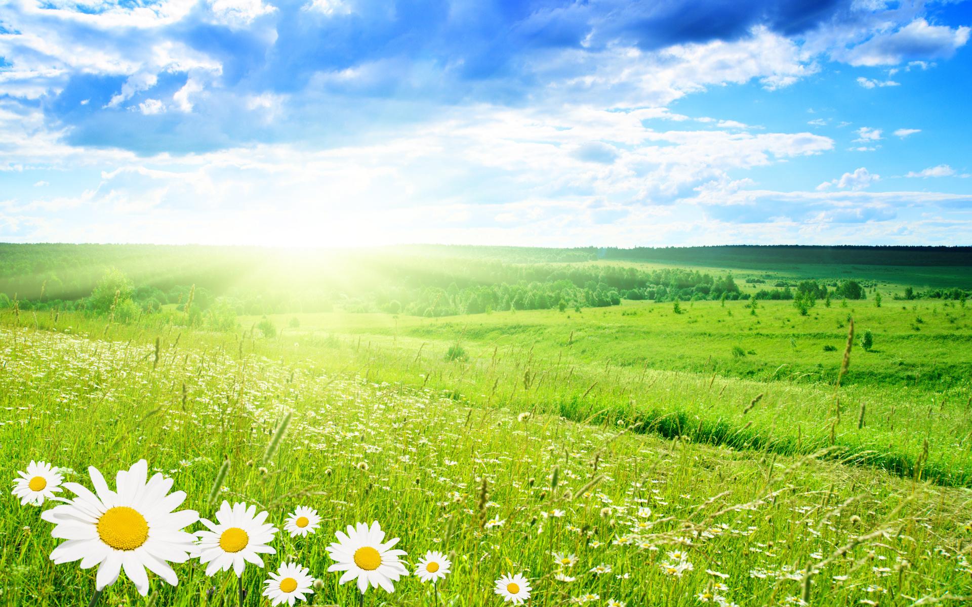 лето, ромашка, небо, поляна, лучи, лучи солнца