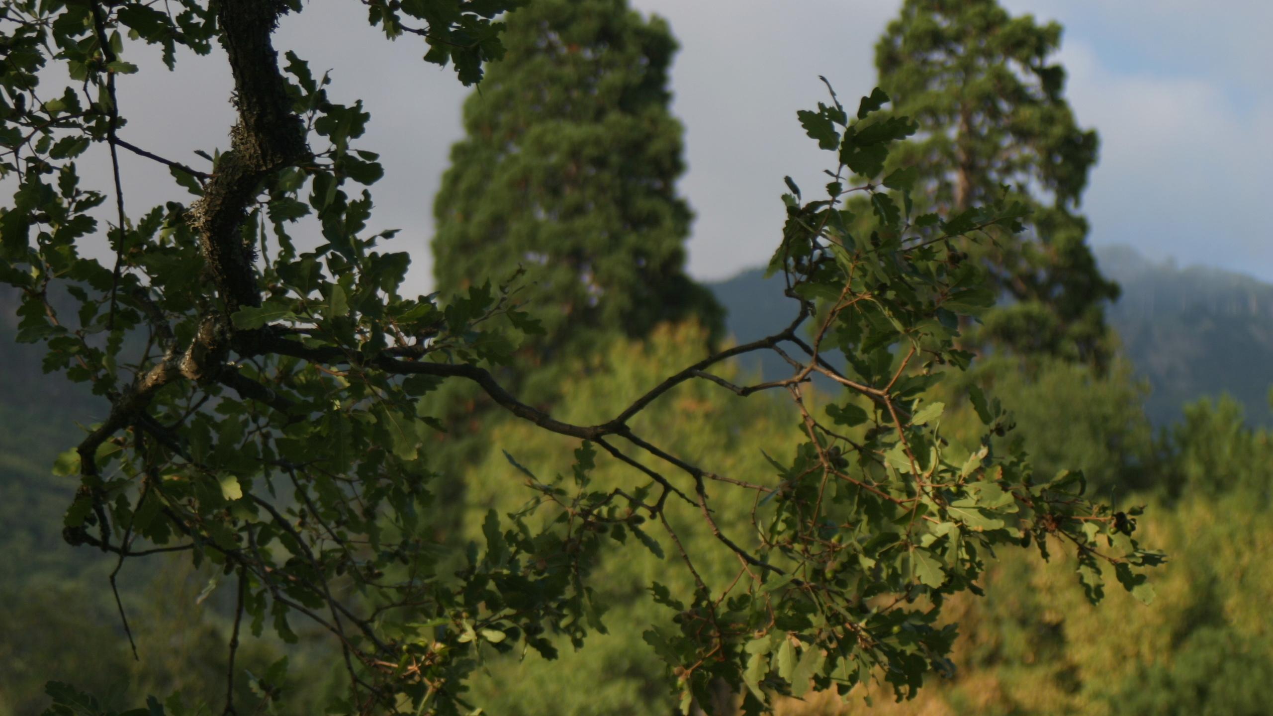 крым, осень, дворец массандра