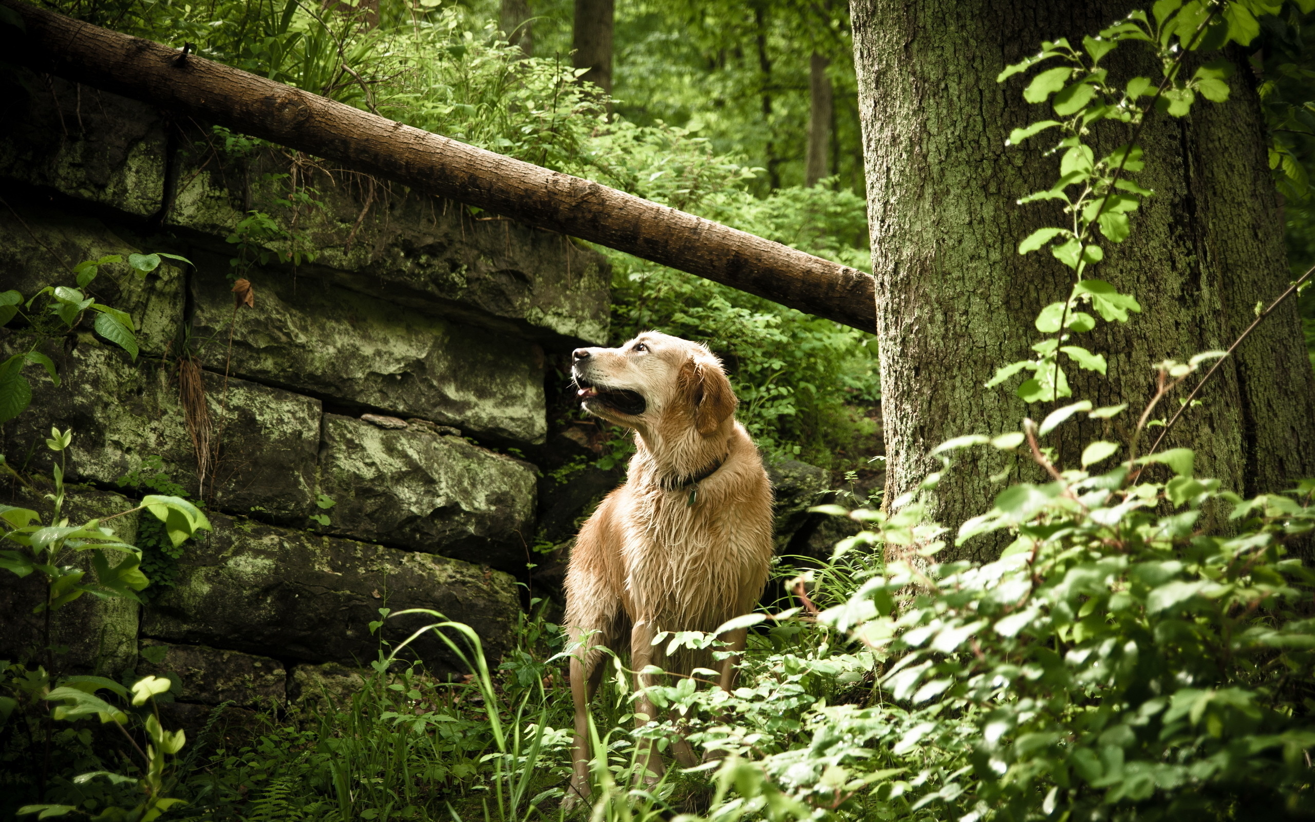 год границей, фото щенков в лесном размер таким