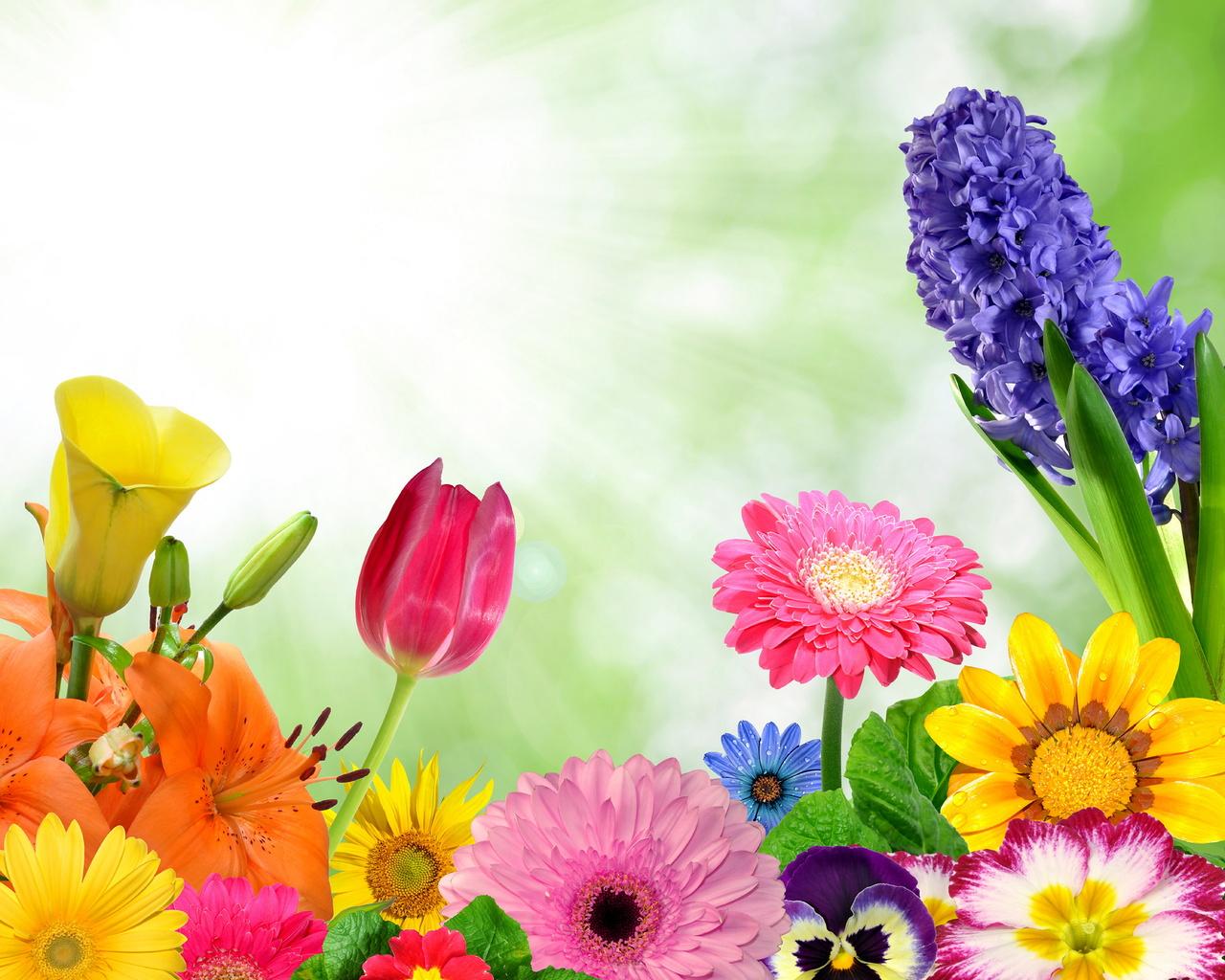 spring, flowers, colorful, gerbera, butterflies, bright, цветы, бабочки, весна