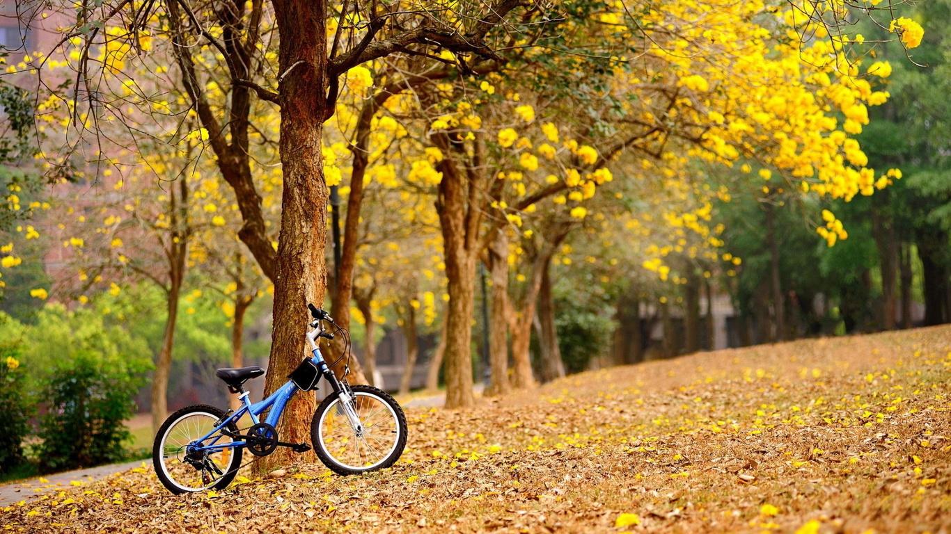 аллея, деревья, велосипед, осень, листва, красота, фауна, осень золотая, парк, аллея,