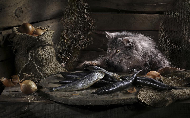 кошка, рыба, лук, чулан, фарт, пушок,супер-котик