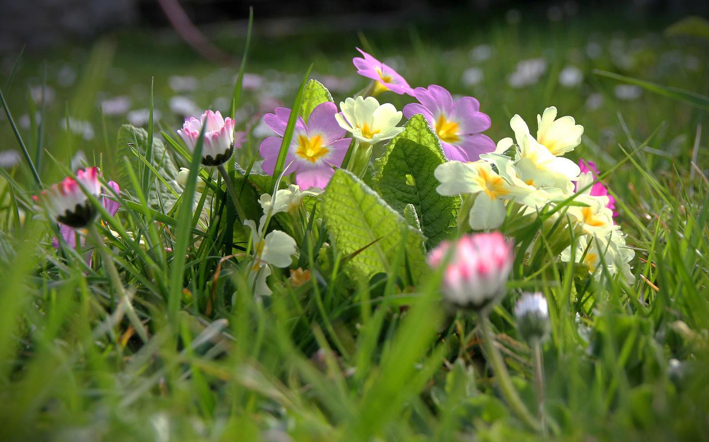 красивые, цветы