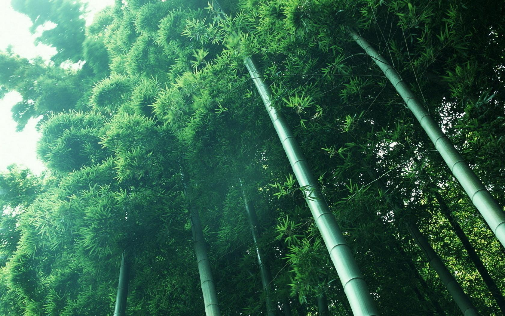 бамбук, роща, природа, зеленый