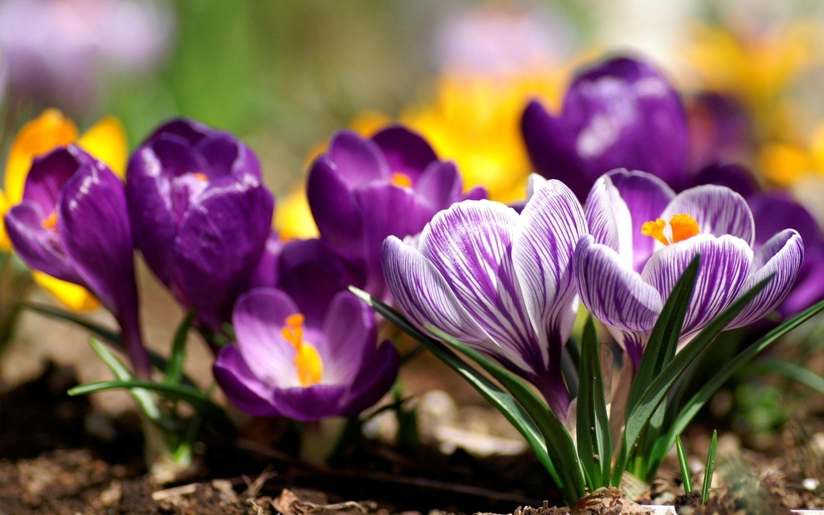Купанием, картинки на рабочий стол красивые цветы весна