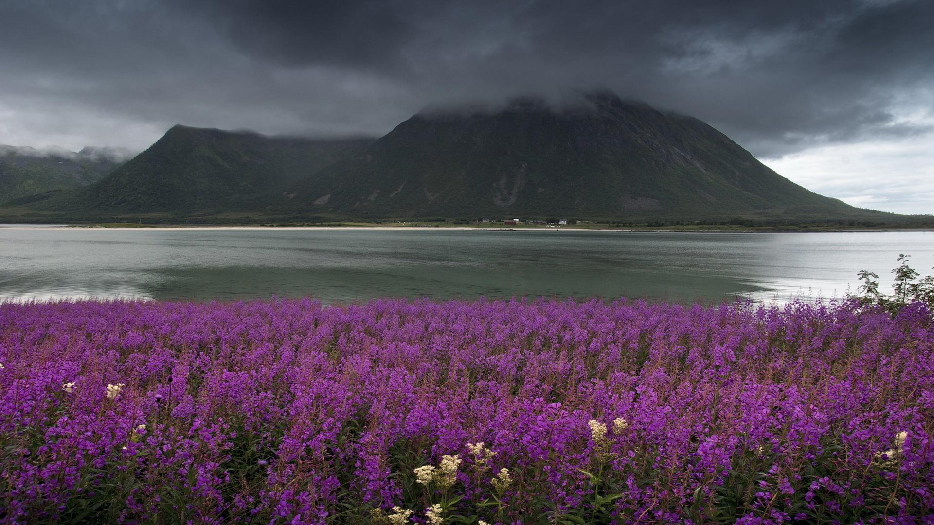 норвегия, горы, озеро, вода, цветы, небо, туман, суровость, флора,