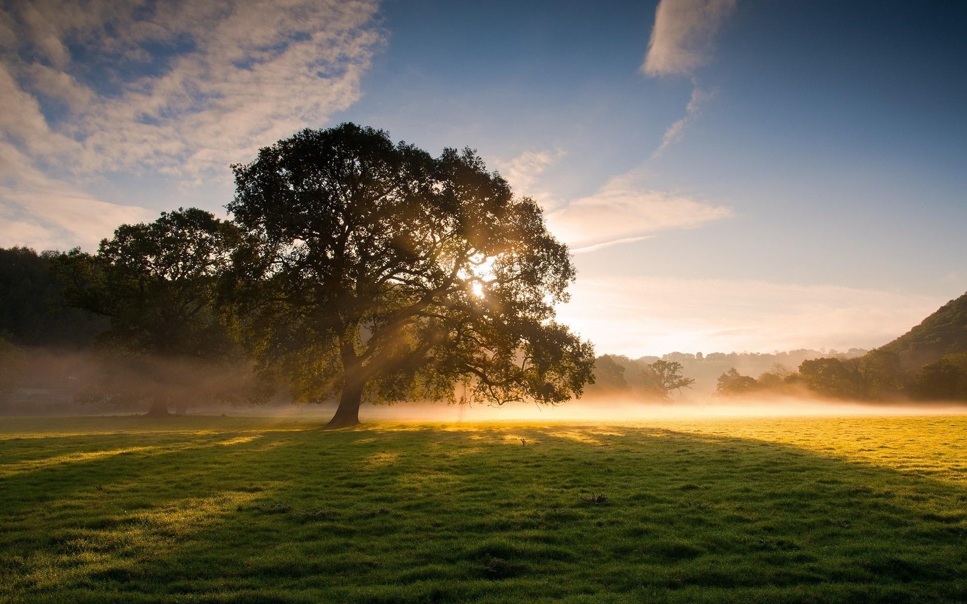 Картинки восход солнца в лесу, днем рождения мужчине