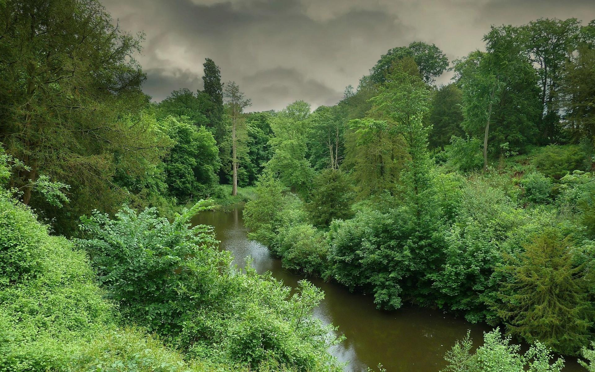 природа, лес, деревья, река, небо, серый, зелёный