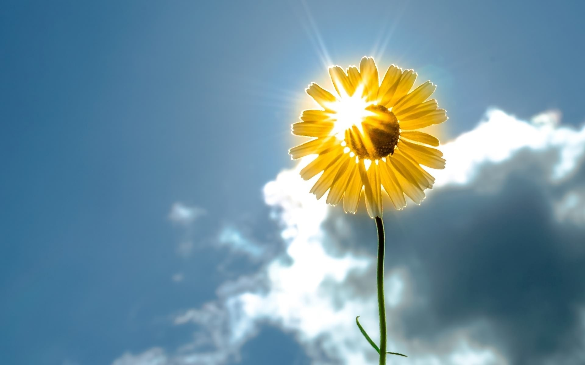 Открытка солнце и цветы, открытка