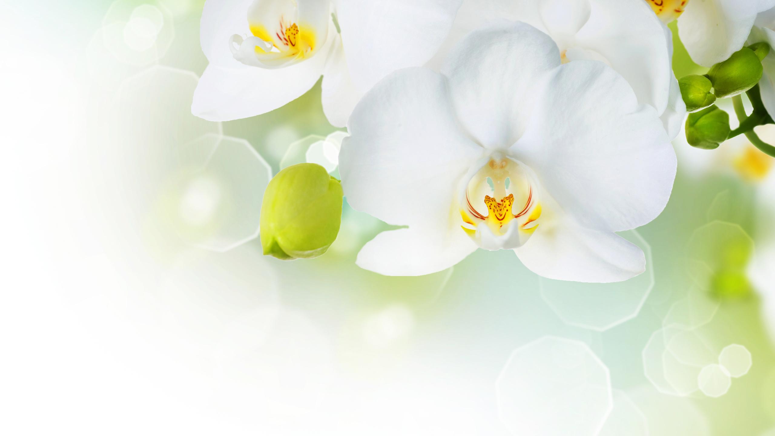 Зайца, открытка орхидеи для фотошопа