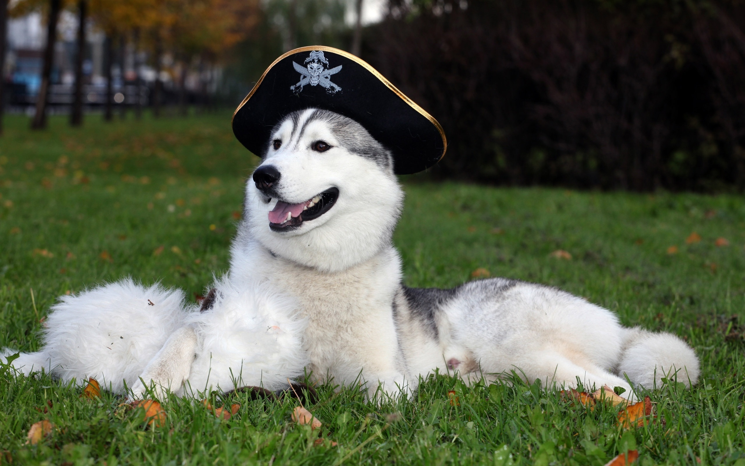 собака, красавчик, трава, деревья, пират