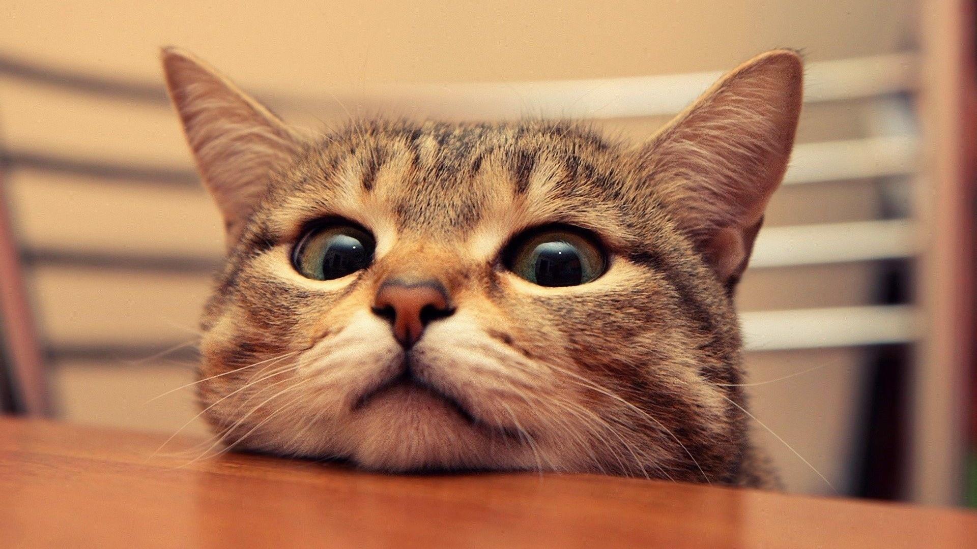 Смешной котик, пасха