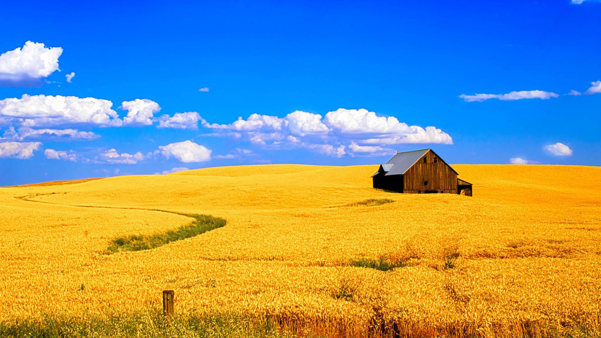 поле, пшеница, дом, небо, облака, пейзаж