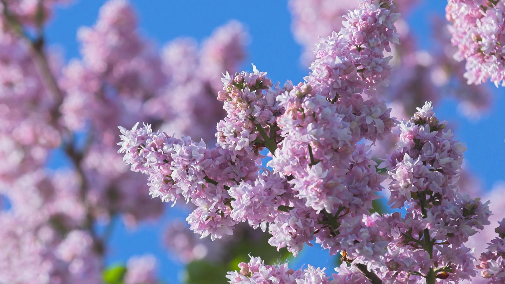 Картинки, картинка на рабочий стол весенние цветы